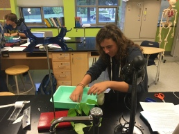IB Bio Lab on Transpiration: Year 2